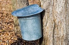 Recipe for Maple Syrup