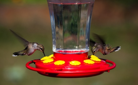 Homemade Hummingbird Food with no chemicals.  Nectar fit for the Hummingbird Gods... #misshomemade | Thousands of recipes at MissHomemade.com