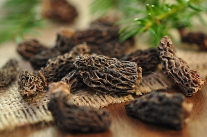 How to Dry Morel Mushrooms