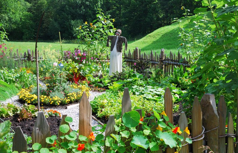 Garden tips and recipes from visitors all over the world #misshomemade