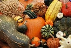 How to Can Pumpkin and Squash